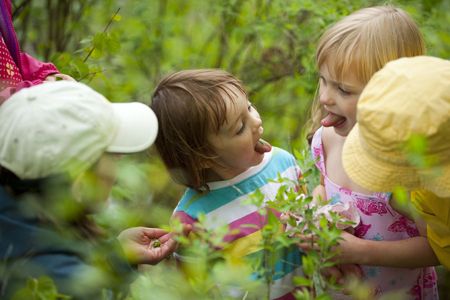 l-r Charlotte Curtin, 3, and Beatrice Curtin, 5, stick their tongues out at each other after sampling Wintergreen leaves with their mother, Julie Curtin, far left.