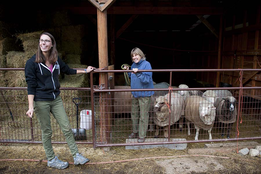 Meredith and I were helping to move the sheep in for the night to keep them safe from the grizzly, Meredith got dragged through the mud by a sheep that REALLY wanted to get away.